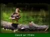 canard-sur-lerdre