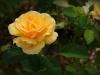 roseraie08